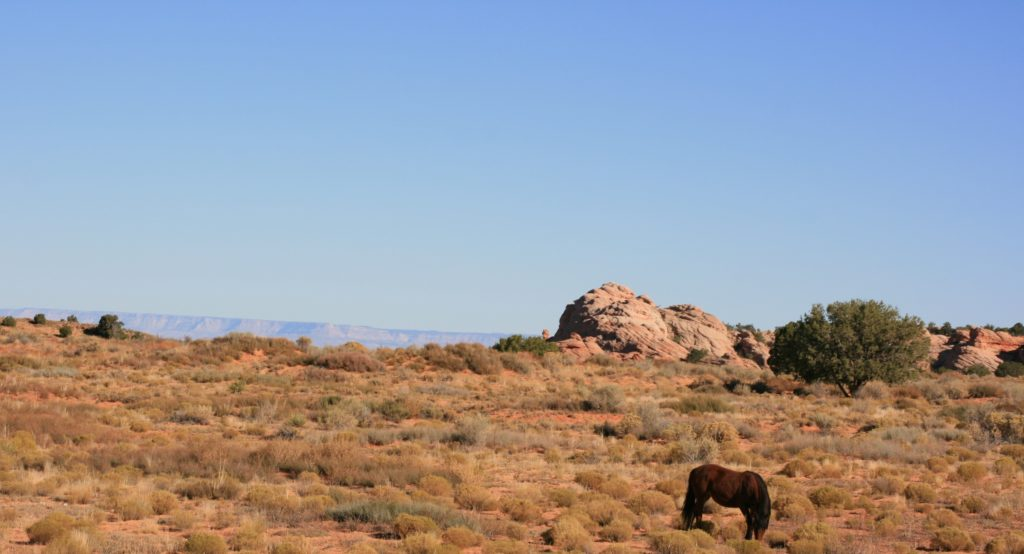 Steven Deschuyteneer Wat is dierenvriend Paarden USA