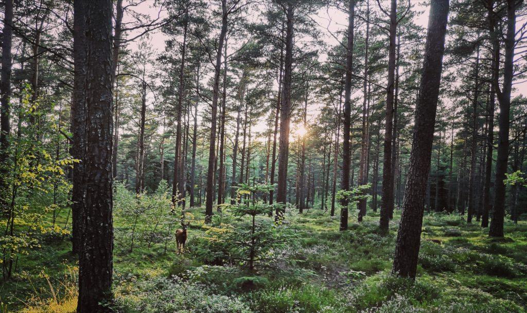 Steven Deschuyteneer Mindfulness zo geweldig doe meer met minder Augustus 2019 Noorwegen
