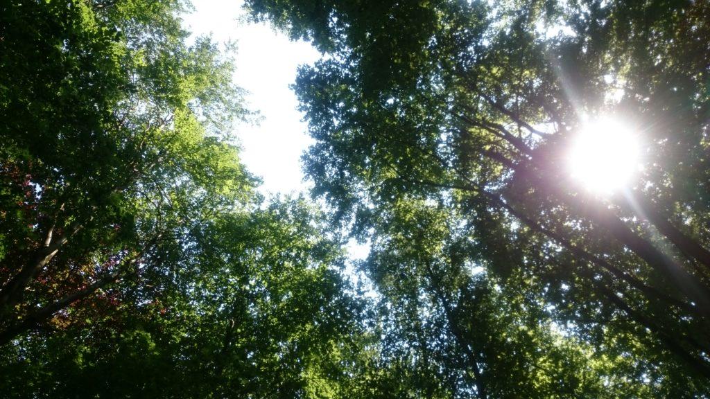 Steven Deschuyteneer Minimalisme de weg naar een lichter leven In the woods