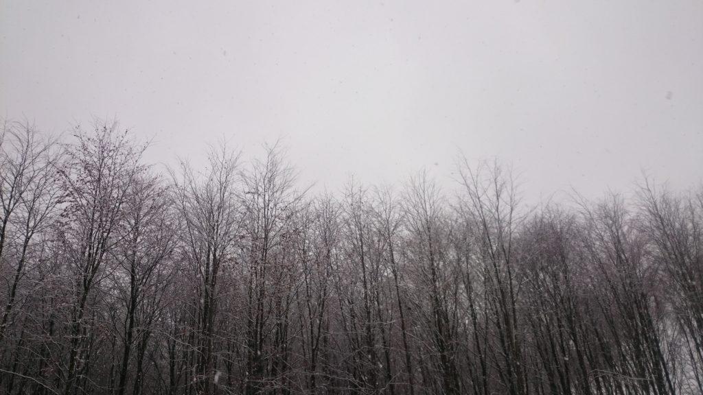 Steven Deschuyteneer Waarom eet ik vlees sneeuw bos
