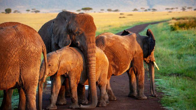 Steven Deschuyteneer Hoe kan ik zo eten met een gezin familie of inwonenden olifant