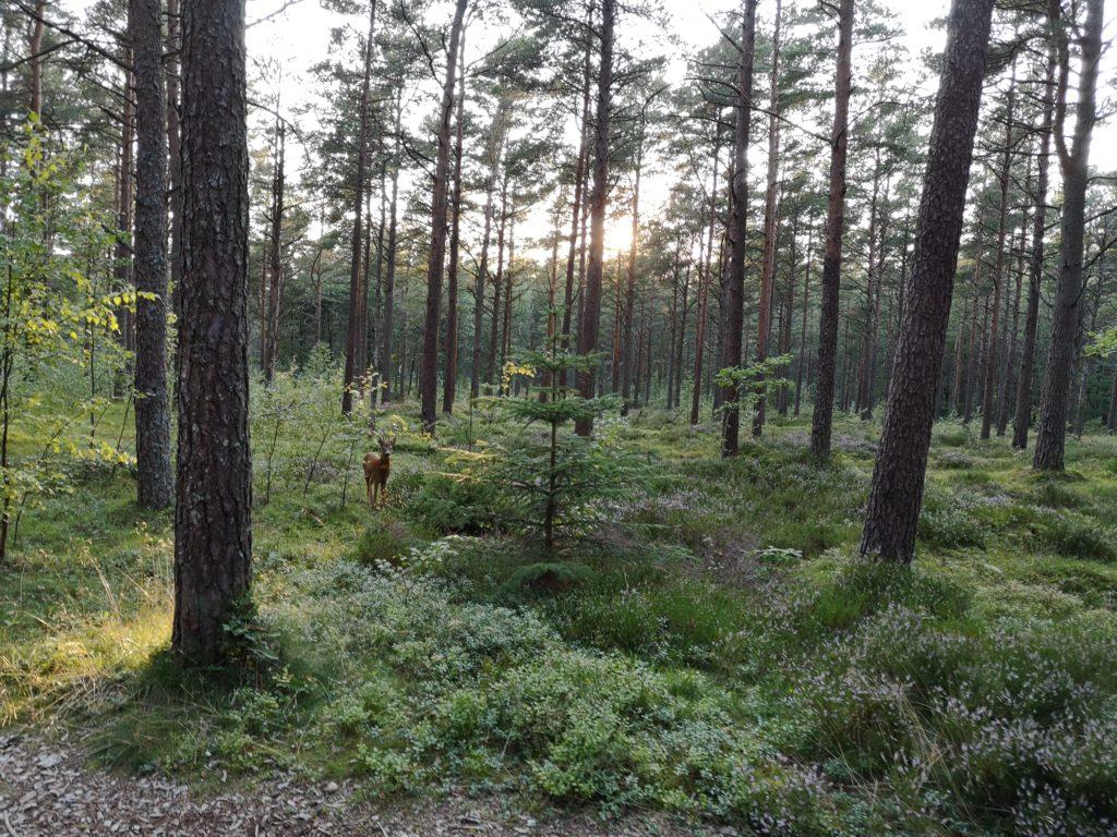 Steven Deschuyteneer Waarom ik me niet vegan voel en het zeker niet perse gezonder is Noorwegen
