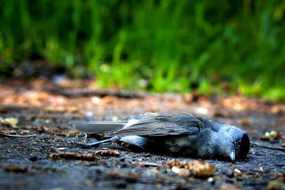 Steven Deschuyteneer 5G en wat je er gemakkelijk tegen kunt doen dode vogel
