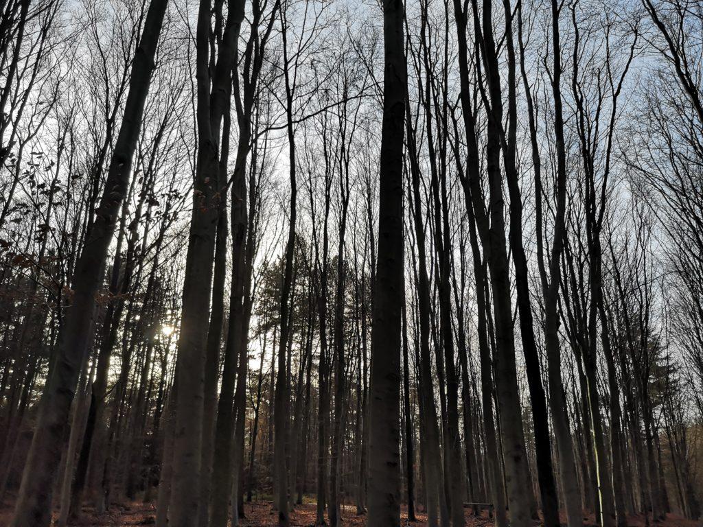 Steven Deschuyteneer Beauvechain en 2030 bomen