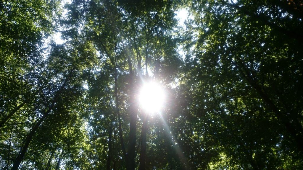 Steven Deschuyteneer Wat leren we door COVID-19 deel 4 snelheid natuur