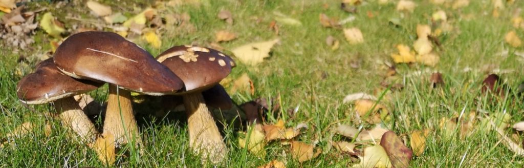 Steven Deschuyteneer De onbewuste problemen van de hippe tuin paddenstoel