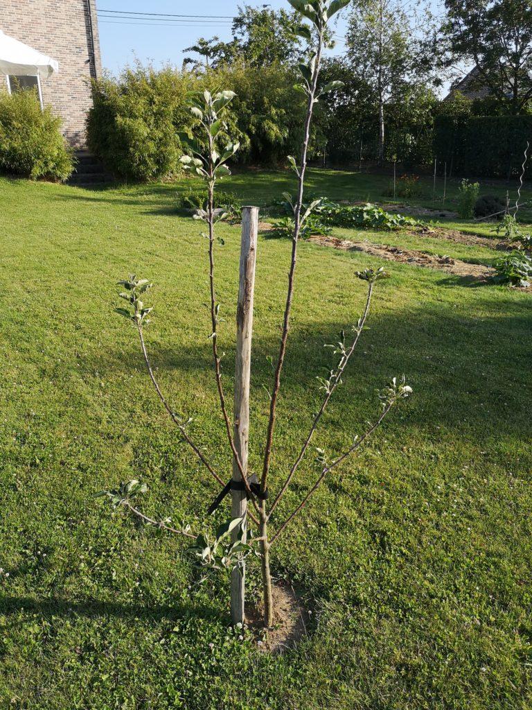 Steven Deschuyteneer Hoe eenvoudig u tuin gezonder maken halfstam