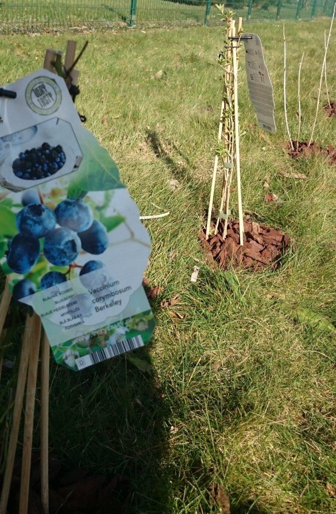 Steven Deschuyteneer Hoe eenvoudig u tuin gezonder maken klein fruit