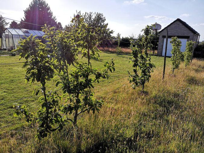 Steven Deschuyteneer Hoe eenvoudig u tuin gezonder maken leibomen