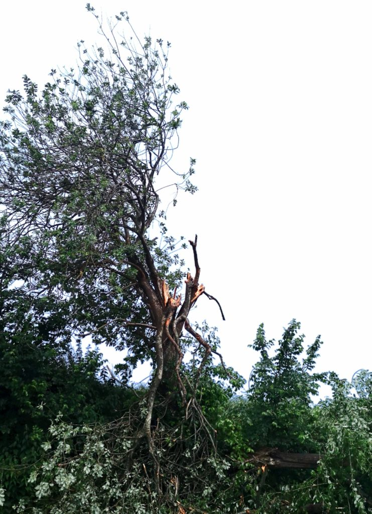 Steven Deschuyteneer Blessure, pijn of ziek, hier is een mogelijke oplossing boom