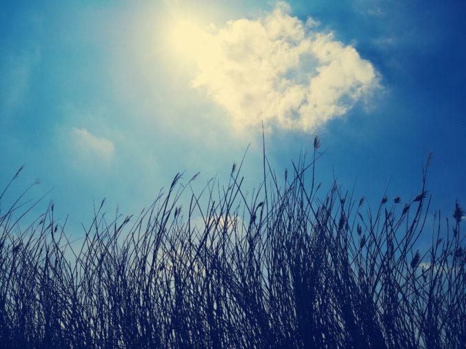 Steven Deschuyteneer De natuur zorgt voor alles en waarom is dat niet genoeg lucht