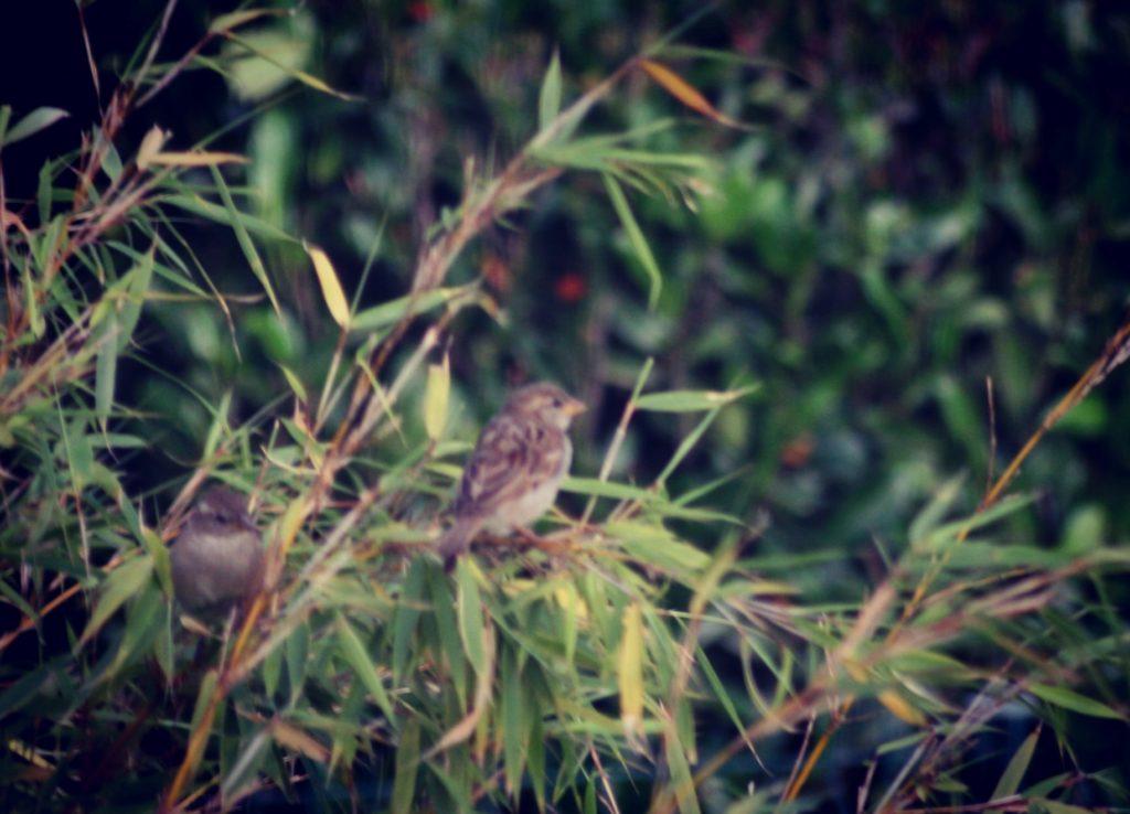 Steven Deschuyteneer De natuur zorgt voor alles en waarom is dat niet genoeg vogels
