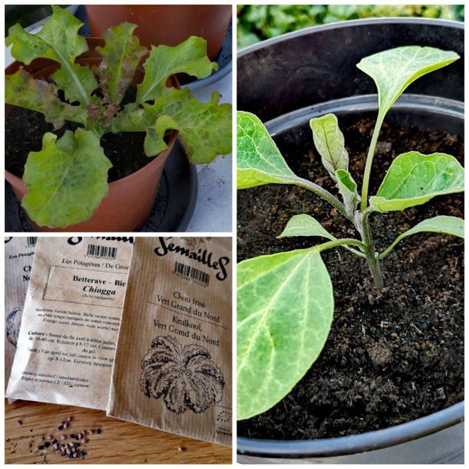 Steven Deschuyteneer Plantjes of zaadjes planten in de groentetuin