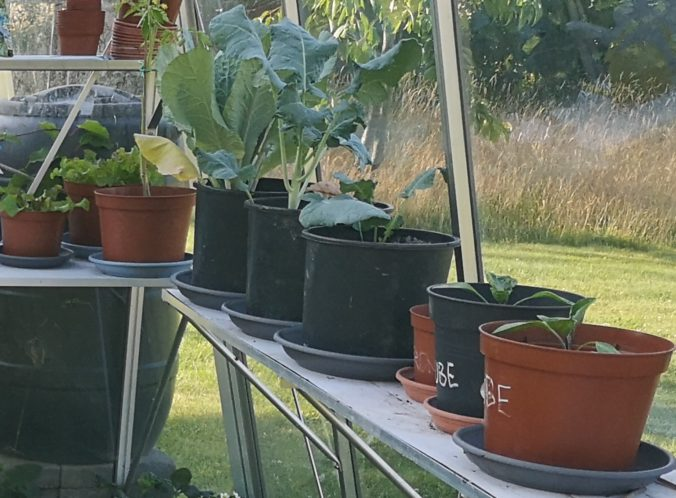 Steven Deschuyteneer Plantjes of zaadjes planten in de groentetuin potjes