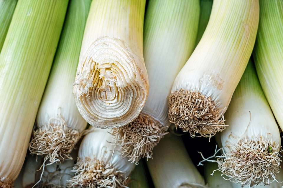Steven Deschuyteneer Plantjes of zaadjes planten in de groentetuin prei