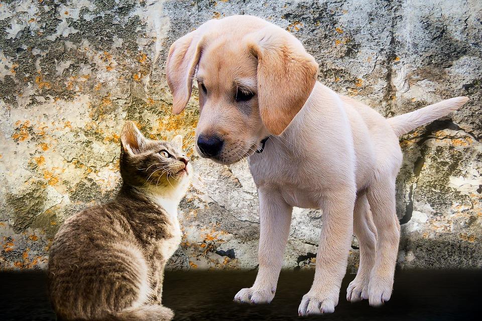 Steven Deschuyteneer Vegan spreekbeurt 10 jaar 4de leerjaar hond kat