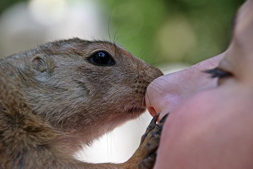 Steven Deschuyteneer Vegan spreekbeurt 10 jaar 4de leerjaar knuffel dier