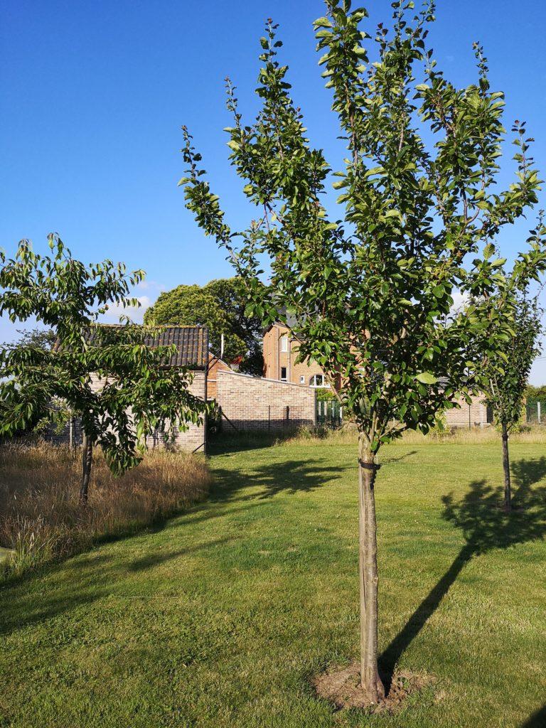 Steven Deschuyteneer Hoe eenvoudig een oase in u tuin maken bomen