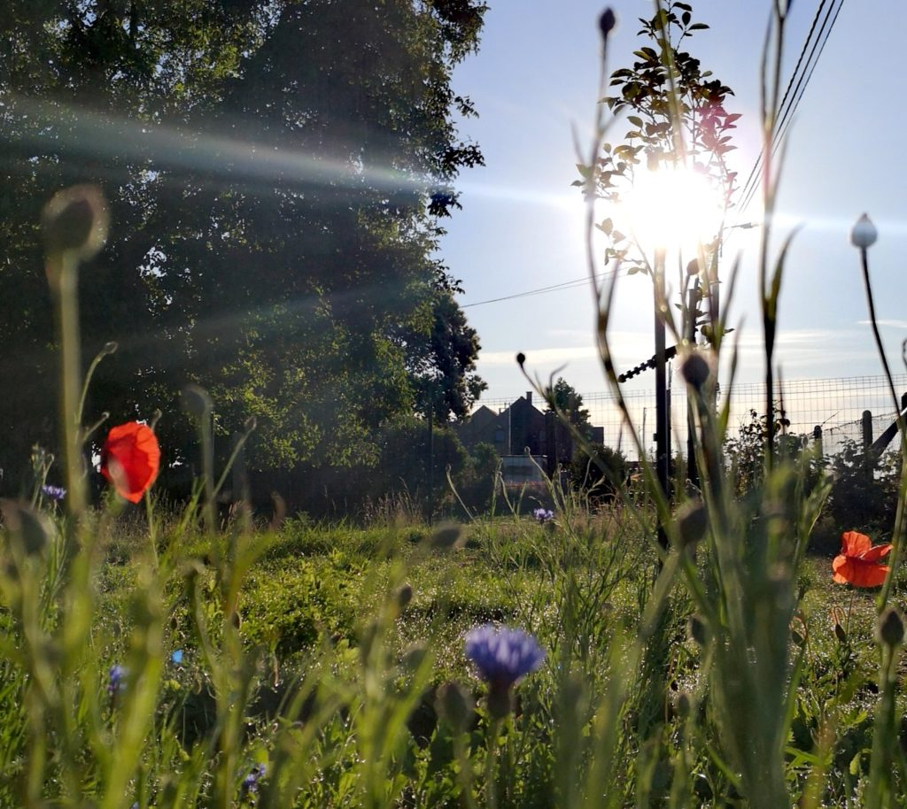 Steven Deschuyteneer Hoe eenvoudig een oase in u tuin maken voortuin