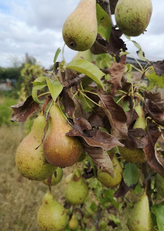 Steven Deschuyteneer Welk fruit en groenten zijn goed voor de mens en welke niet peren