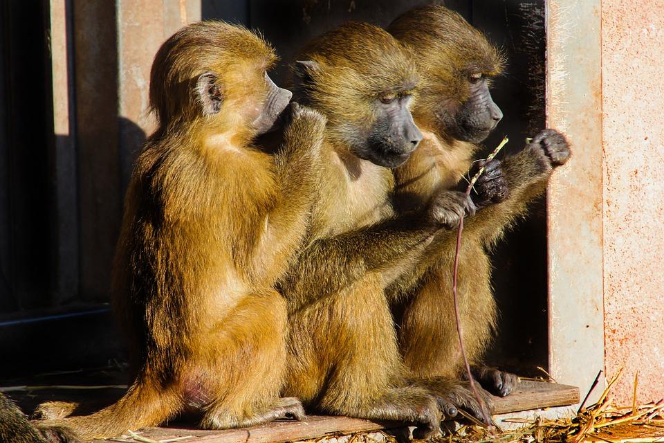 Steven Deschuyteneer Hoe kom je in contact met dat geheime motortje dat in ieder van ons zit apen
