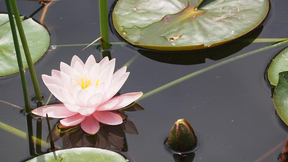 Steven Deschuyteneer Wie voelt zich onderdanig als slachtoffer en wie houdt ervan lotus