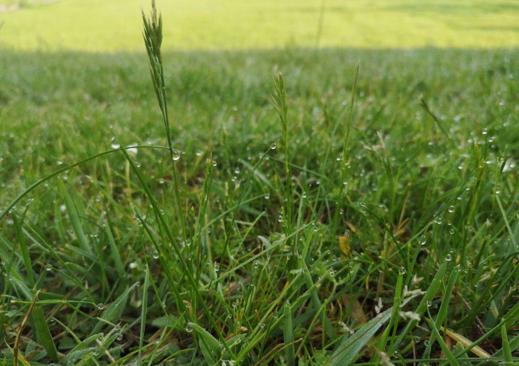 Steven Deschuyteneer Een leven met de natuur hoe en waarom doe je dat gras