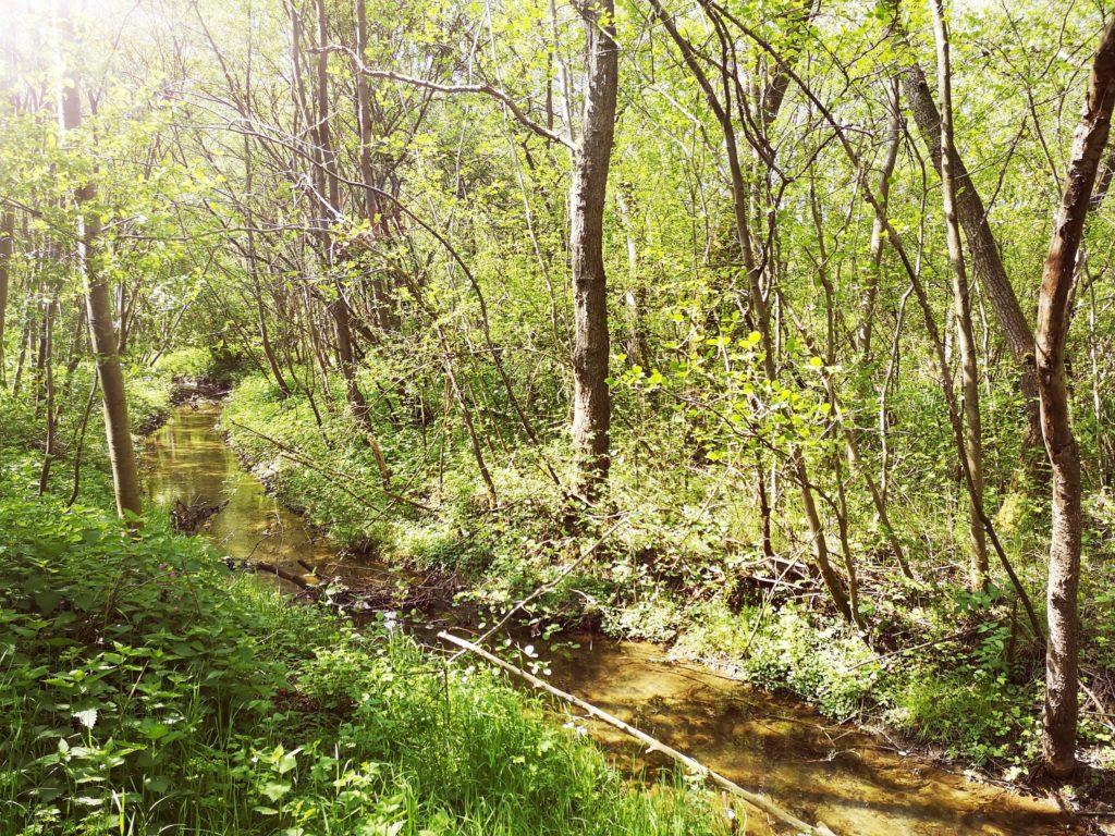 Steven Deschuyteneer Een leven met de natuur hoe en waarom doe je dat riviertjes